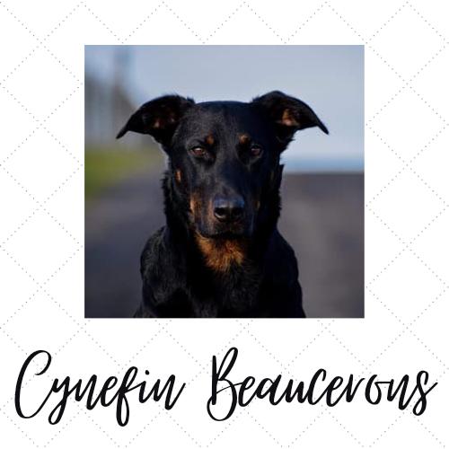 Cynefin Beaucerson