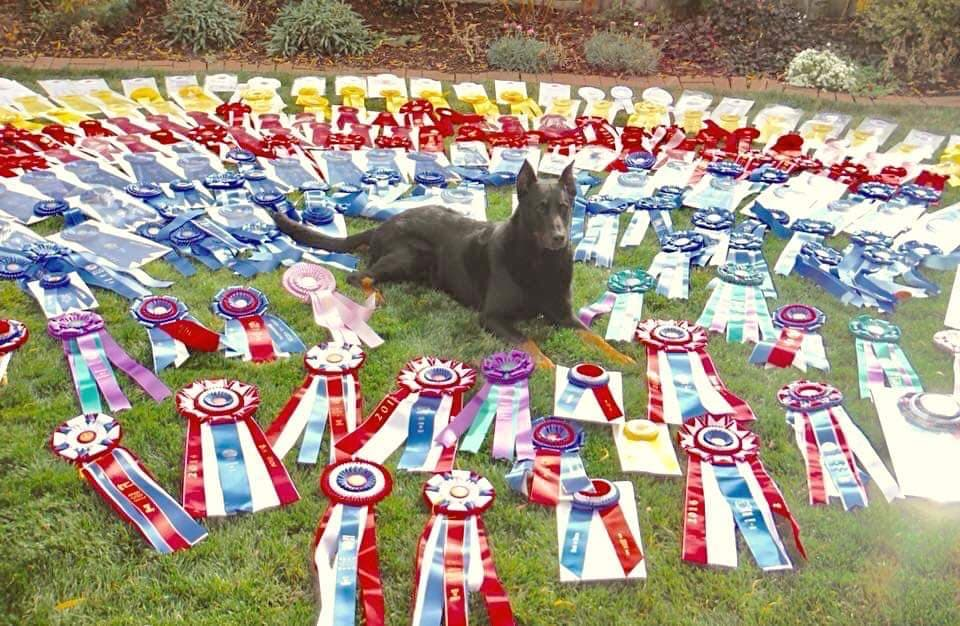 Gideon w All Ribbons