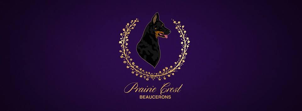 Prairie Crest Beaucerons