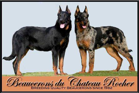 Beaucerons du Chateau Rocher