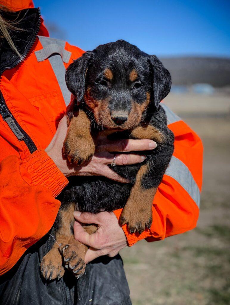 skittle girl puppy