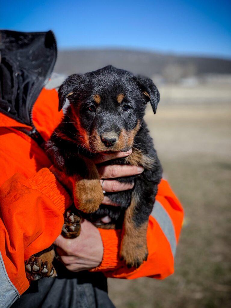 smolsmackerel girl puppy